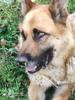 Артемовская служба отлова издевается над собаками