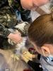 Состоялась стерилизация животных