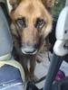 Продолжение истории с собакой, пострадавшей от Артемовского отлова