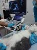 Помогите спасти кота Тимошу