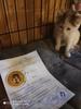 Более 50 животных было стерилизовано