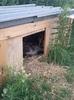 Собачий дом под угрозой разорения