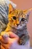 Кошечки и коты ищут дом