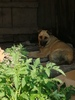 Собака и ее щенки с Клары Цеткин