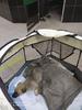 Умирает щенок, найденный на улице