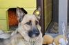 Выпуск собаки-мамы обратно в среду обитания