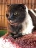 У нас новый питомец, беременная кошка