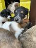 Стерилизация собаки-мамы