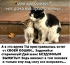 Стерилизуйте своих домашних животных