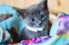 Чудесные котята ждут своих хозяев