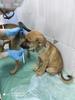 Продолжаем сбор на лечение щенков